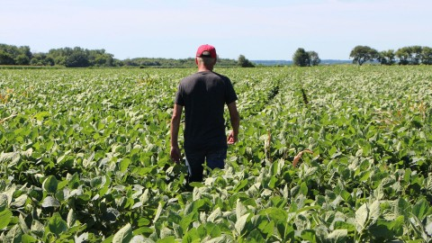 Farmer Terry Davidson walks through his soy fields in Illinois in July. Photo: Nova Safo/AFP/Getty Images