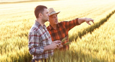 Farmers discuss an upcoming harvest. Photo: Shutterstock
