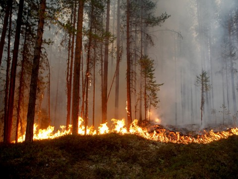 Sweden calls for international help as wildfires rage in Arctic circle